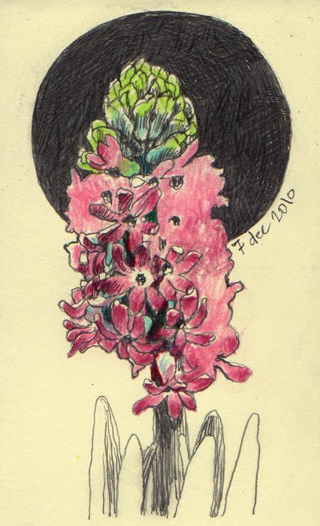 hyacinth_3_10