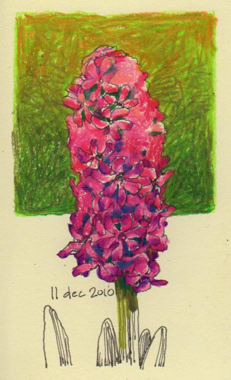 hyacinth_4_10