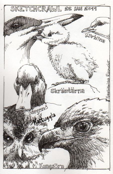 sketchcrawl_22jan2011_2