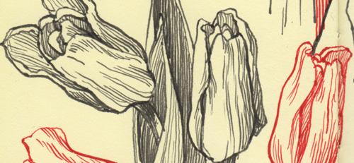 noodlers_flex_tulips