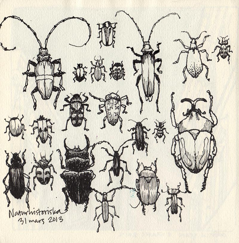 bugs_naturhist_130331
