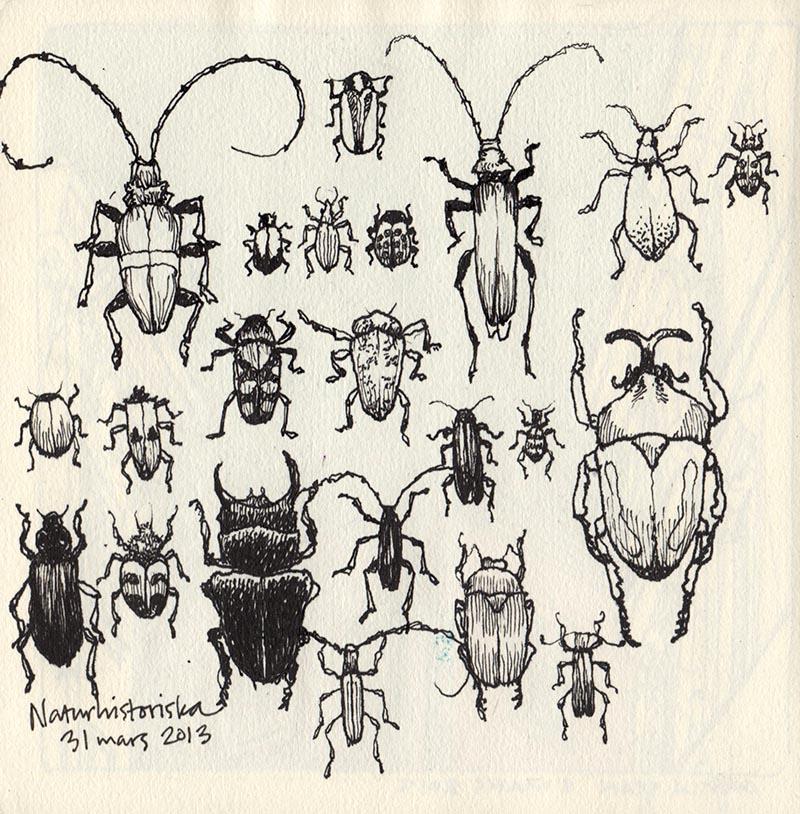 bugs_naturhist_130331