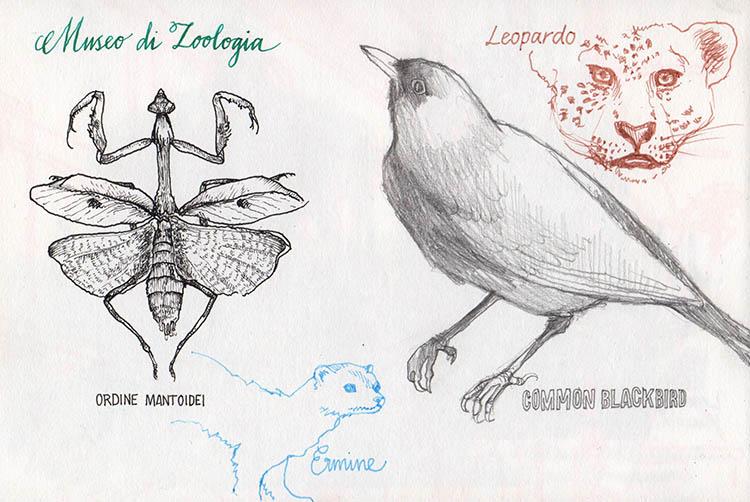 museodizoologia1_140606