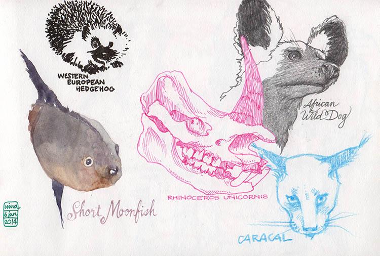 museodizoologia2_140606