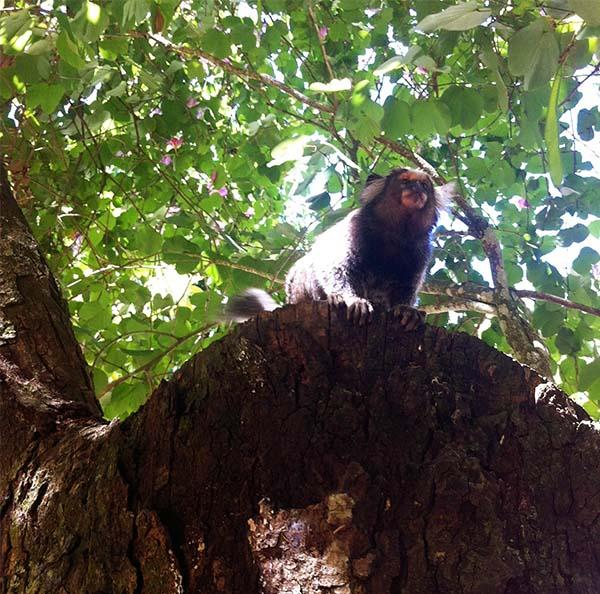 rio_monkey_140824