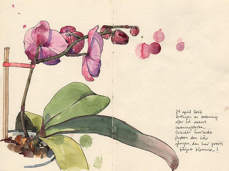 orkidee_070424
