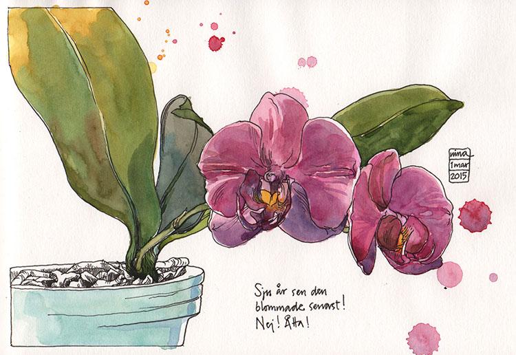 orkidee_150301