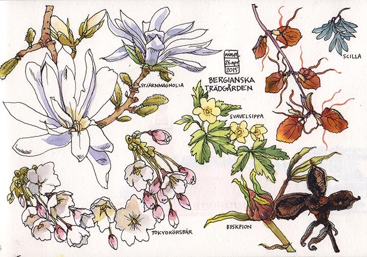bergianska_150426
