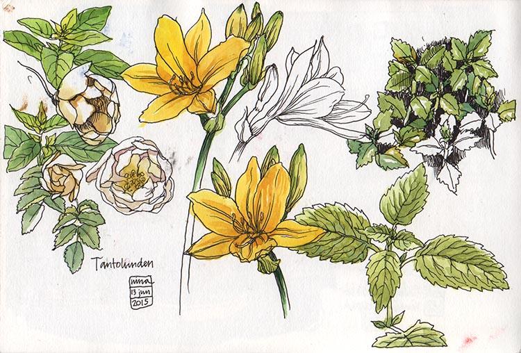 blommor_tantolunden_150613